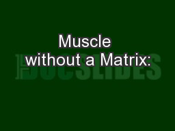 Muscle without a Matrix: