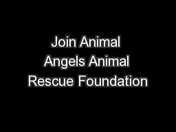 Join Animal Angels Animal Rescue Foundation PowerPoint PPT Presentation