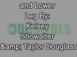 The Ankle and Lower Leg By: Kelsey Showalter & Taylor Douglass