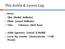 The Ankle & Lower Leg