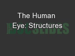 The Human Eye: Structures