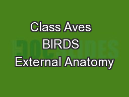 Class Aves  BIRDS  External Anatomy
