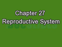 Chapter 27 Reproductive System