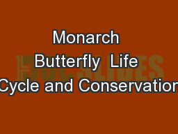 Monarch Butterfly  Life Cycle and Conservation