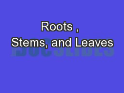 Roots , Stems, and Leaves