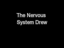 The Nervous System Drew