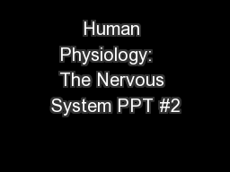 Human Physiology:   The Nervous System PPT #2