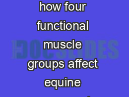 Equine II � 3.02 Understand how four functional muscle groups affect equine movement and differen