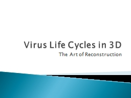 Virus Life Cycles in 3D The Art of Reconstruction