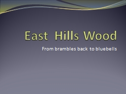 East  Hills Wood From brambles back to bluebells