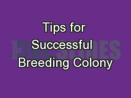Tips for Successful  Breeding Colony