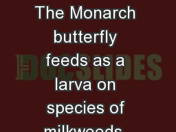 SYMBIOTIC RELATIONSHIPS The Monarch butterfly feeds as a larva on species of milkweeds. The milkwee