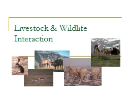 Livestock & Wildlife Interaction