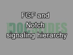 FGF and Notch signaling hierarchy