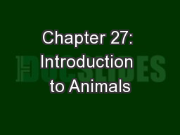 Chapter 27: Introduction to Animals PowerPoint PPT Presentation