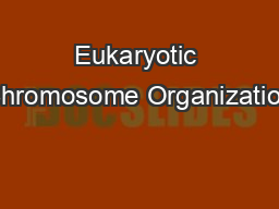 Eukaryotic Chromosome Organization