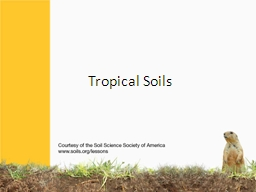 Tropical Soils Lush   growth