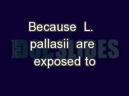 Because  L.  pallasii  are exposed to