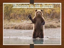 Welcome to the Grove! Bear Necessities about