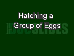 Hatching a Group of Eggs