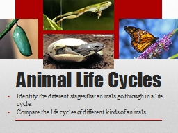 Animal Life Cycles Identify the different stages that animals go through in a life cycle.