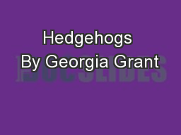 Hedgehogs By Georgia Grant