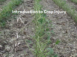 Introduction to Crop Injury