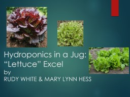 """Hydroponics in a Jug: """"Lettuce"""" Excel"""