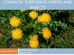 common turfgrass weeds and insects