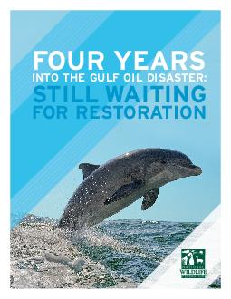 NATIONAL WILDLIFE FEDERATION FOUR YEARS INTO THE GULF OIL DISASTER STILL WAITING FOR RESTORATION FOUR YEARS INTO THE GULF OIL DISASTER STILL WAITING FOR RESTORATION NATIONAL WILDLIFE FEDERATION  INTRO