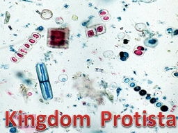 Kingdom Protista Any organism not classified as a�
