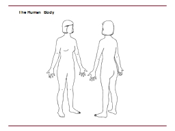 The Human Body The Face noun PowerPoint PPT Presentation