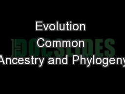 Evolution Common Ancestry and Phylogeny