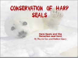 Conservation of Harp Seals
