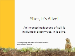 Yikes, It�s Alive! An interesting feature of soil is its living biology�yes, it is alive.