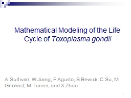 Mathematical Modeling of the Life Cycle of