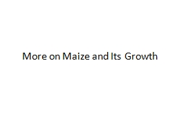 More  on Maize and  Its Growth