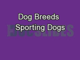 Dog Breeds Sporting Dogs