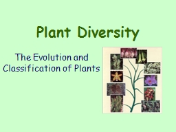 Plant Diversity The Evolution and Classification of Plants