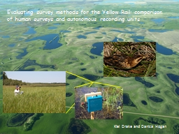 Evaluating survey methods for the Yellow Rail: