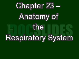 Chapter 23 – Anatomy of the Respiratory System