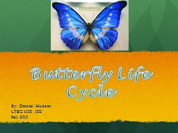 Butterfly Life Cycle By: Christal Hudson PowerPoint PPT Presentation