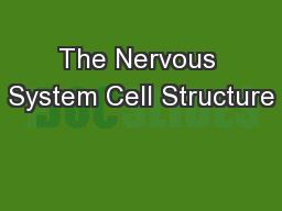 The Nervous System Cell Structure