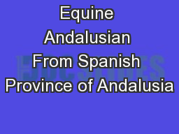 Equine Andalusian From Spanish Province of Andalusia