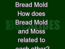 Moss & Bread Mold How does Bread Mold and Moss related to each other?