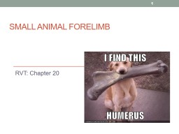 Small Animal Forelimb RVT: Chapter 20