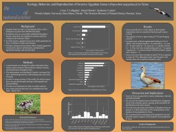 Results Ecology , Behavior, and Reproduction of Invasive Egyptian Geese (