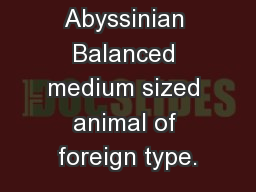 Cat breeds Abyssinian Balanced medium sized animal of foreign type.
