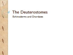 The  Deuterostomes Echinoderms and Chordates