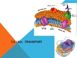 7.3 Cell Transport 2006-2007